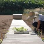 rollocartonagricultura2